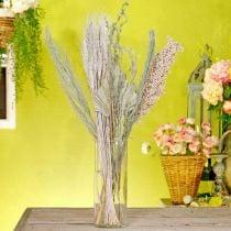 Flores secas mezcla exótica de naturaleza blanca, mezcla de flora seca