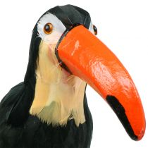 Tucán Deco con plumas Negro L37cm