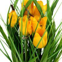 Tulipanes en maceta amarillo 30cm