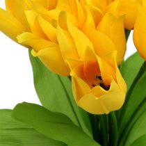 Tulip Bush amarillo H30cm