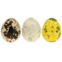 Surtido de huevos de codorniz amarillo, natural 3cm 72p