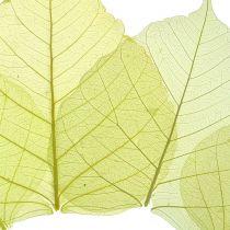 Willow Leaves Skeletonized Yellow Mix 200 piezas
