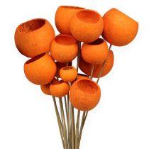 Bell Cup Mix en un palito naranja 15pcs