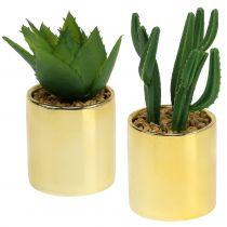 Cactus verde en la olla dorada 12cm - 17cm 4pcs