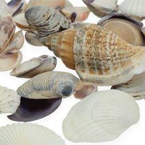 Mezcla de conchas natural 400g