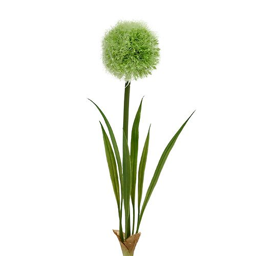 Allium Green L37,5cm 4 piezas