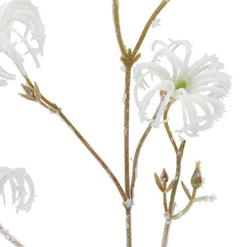 Clematis rama blanca flocada 62cm 3pcs