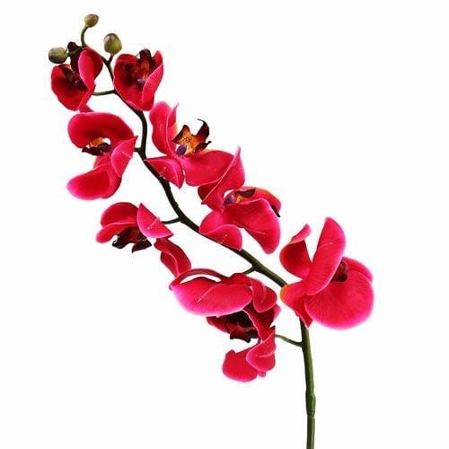 Orquídea deco en fucsia 77cm