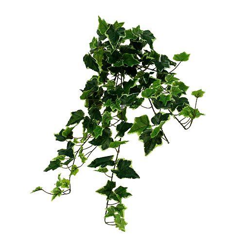Efeuhänger blanco-verde 70cm