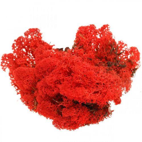 Musgo decorativo musgo de reno rojo para manualidades 400g