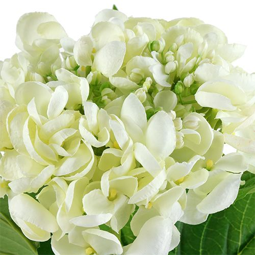 Hortensia 60cm blanco