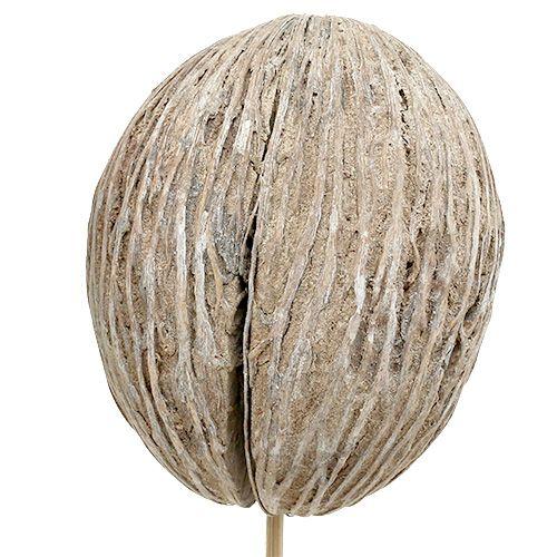 Bola de menta en palo mix blanco lavado 6pcs