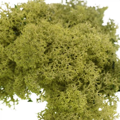 Musgo decorativo para manualidades Musgo natural verde claro preservado 40g