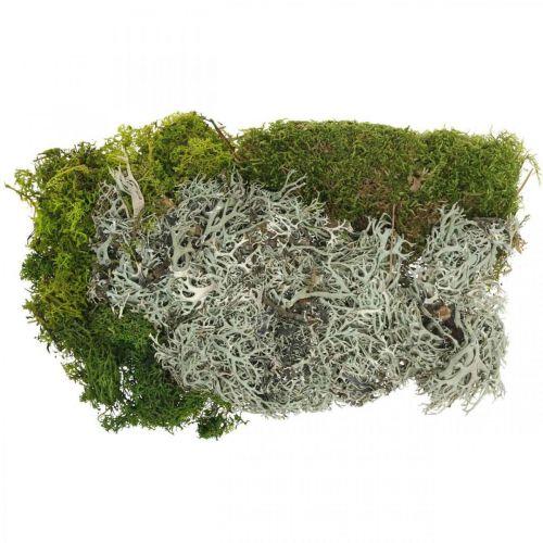 Musgo decorativo para manualidades Mezcla de musgo y liquen verde, gris 100g