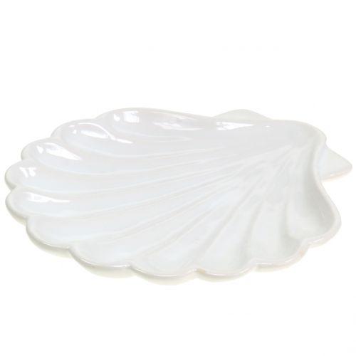 Concha Decorativa Concha Blanca 15cm x 16cm 3pcs
