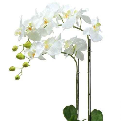 Orquídea blanca sobre bola de tierra 65cm