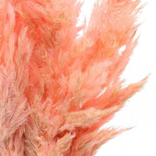 Hierba de pampa flores secas rosadas secas 65-75cm 6 piezas en un manojo