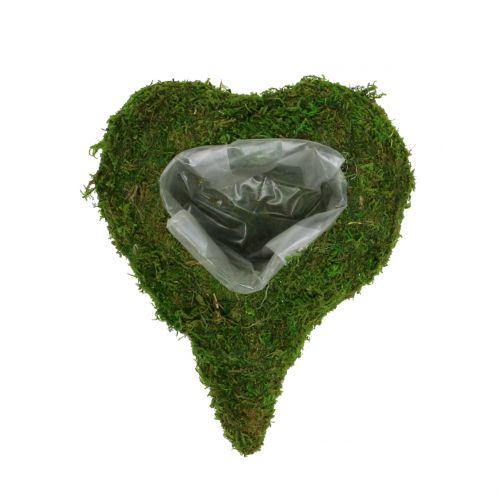 Planta Corazón Musgo 23cm x 19cm