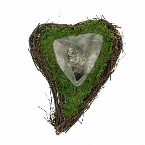 Planta corazón vid, musgo 22cm x 28cm H8cm