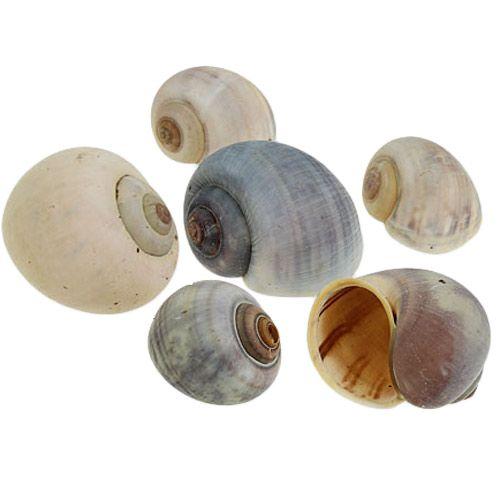 Concha de caracol natural 1kg