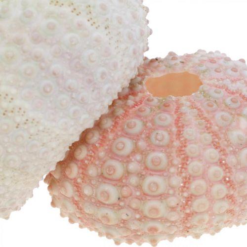 Maritime deco carcasa de erizo de mar rosa, blanco scatter deco 55pcs