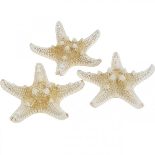 Starfish Nature Decoración de mesa marítima 5-8cm Real Starfish 20pcs