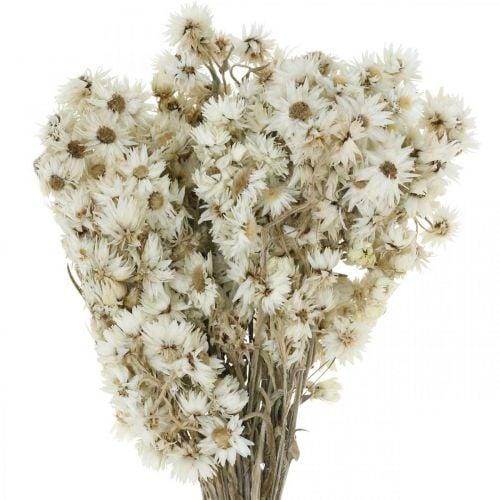 Flores Eternas Ramo de Flores Secas Blanco Pequeño 15g