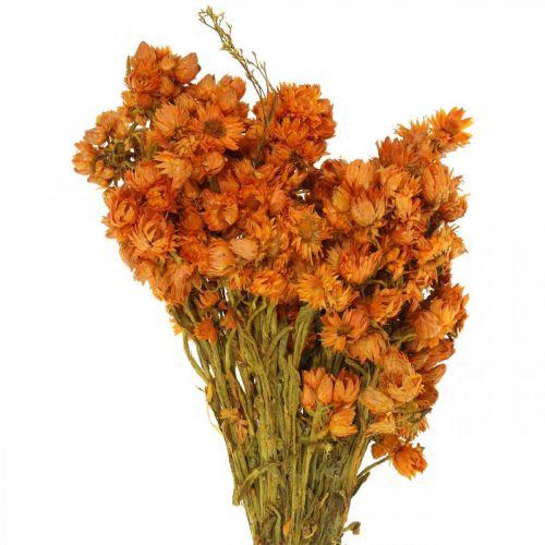 Flores eternas Flores secas Naranja Pequeño 15g