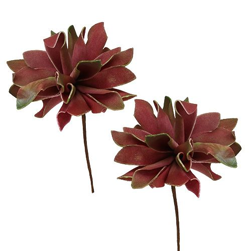 Suculentas rojo oscuro Ø10cm 12pcs