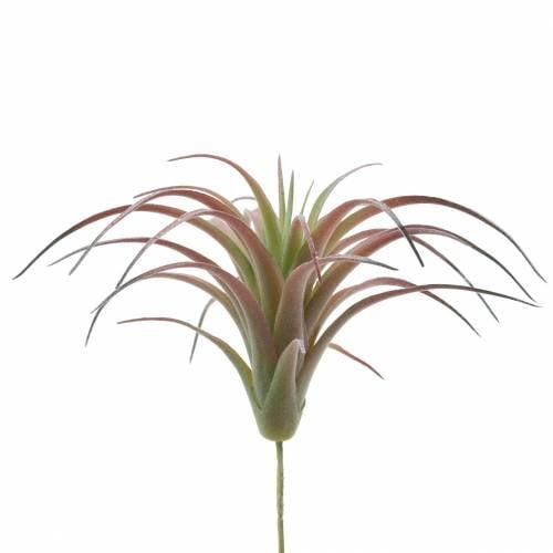 Tillandsia verde-rojo flocado 15cm 4pcs