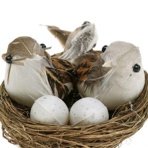 Nido de pájaro con huevos y pájaros 6pzs