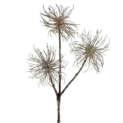 Witch Hazel Branch champagne 45cm 3 piezas