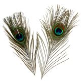 Plumas de pavo real 22cm - 30.5cm 12pcs