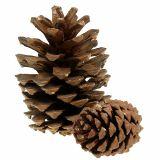 Conos de pino mezclan grandes 14kg